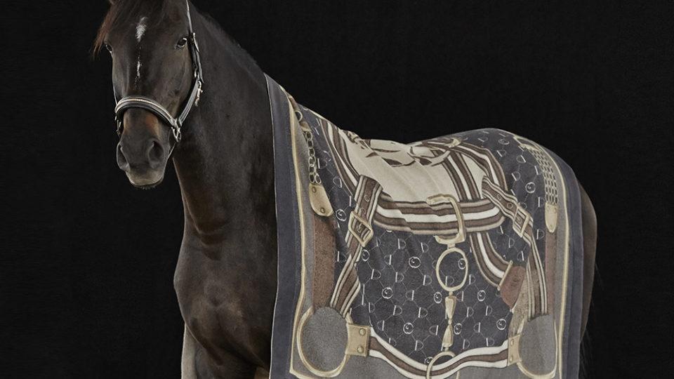 bild på en häst med vestrum's fina cashmere pläd