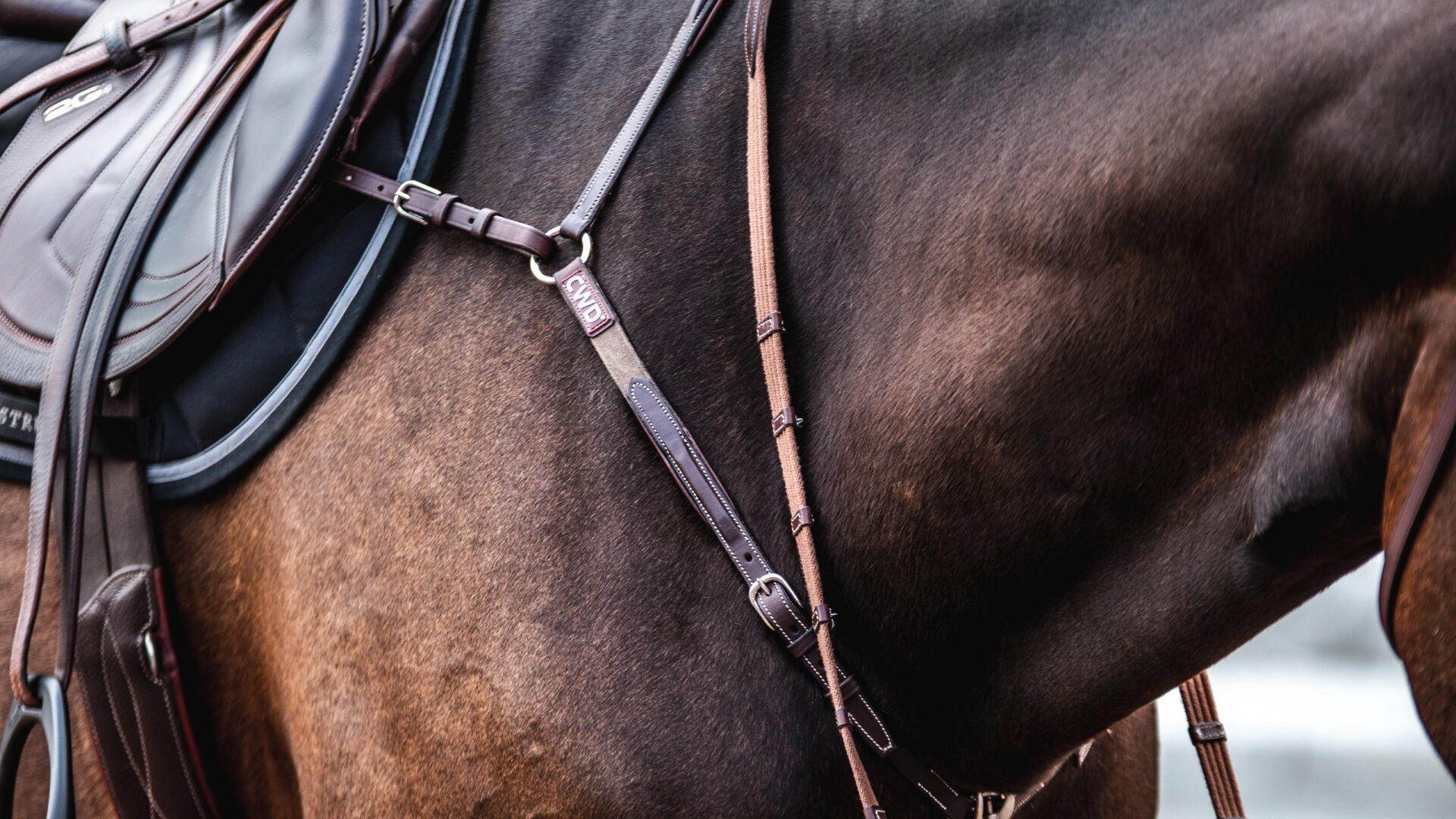 bild på modern cwd förbygel och tyglar ser ut på häst