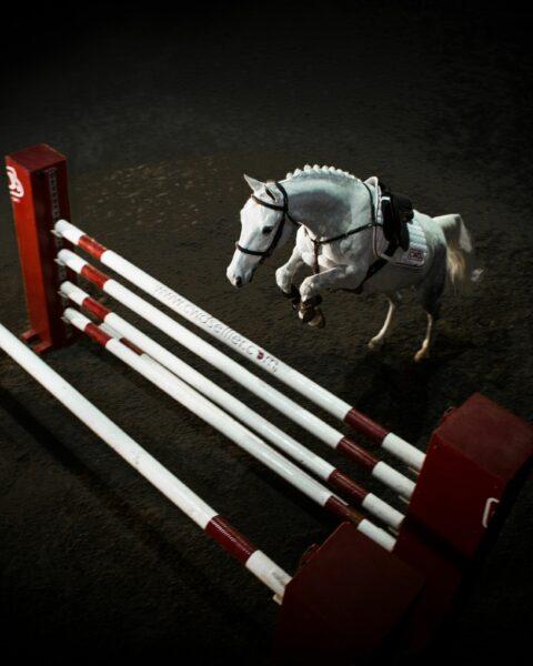 Bild på häst i cwd utrustning som hoppar över hinder